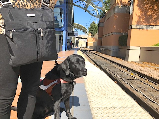 photo of a guide dog team standing on a light rail train platform